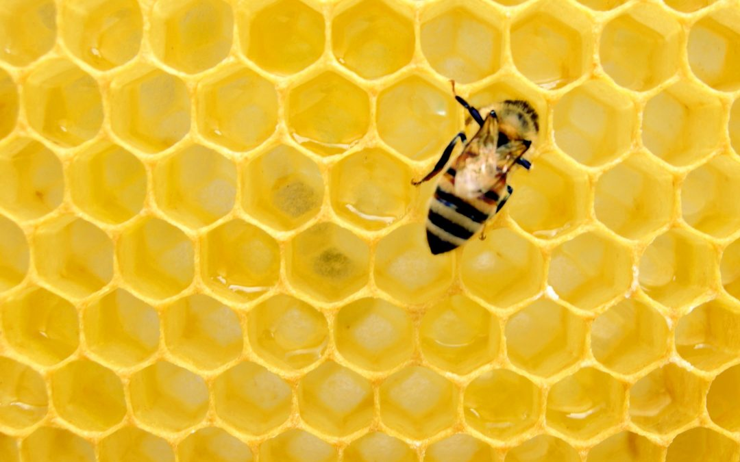 Cooking With Honey: The Healthy Sweetener